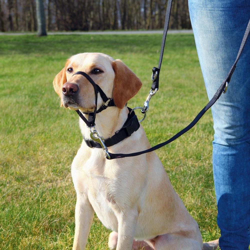 Шлея (Халти) TRIXIE для собак для дрессировки Top Trainer Training Harness, XL,54-66см/46см